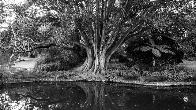 free photo trees large black and white free image on pixabay 142631. Black Bedroom Furniture Sets. Home Design Ideas