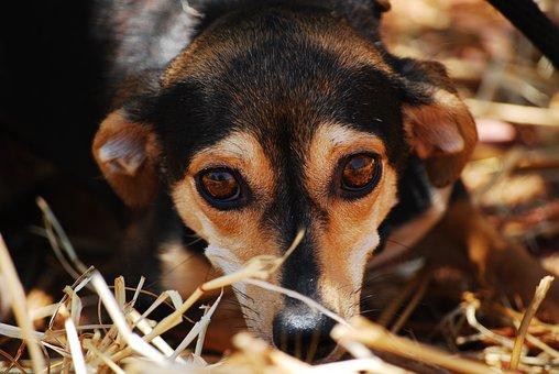 Dog, Eyes, Anxious, Close