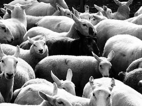 Дагестанские производители планируют увеличить экспорт баранины в Иран