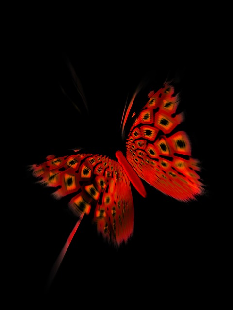 Butterfly Black Red Free Image On Pixabay