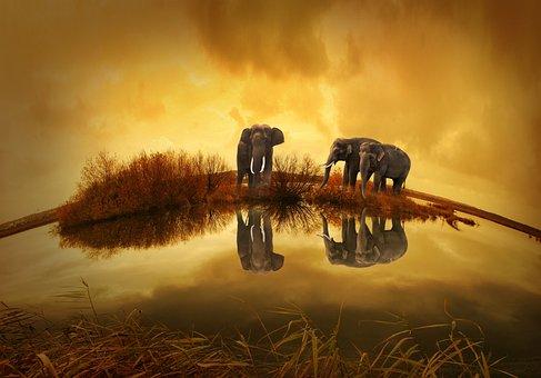 Tailandia Elefante Puesta Del Sol La Natur