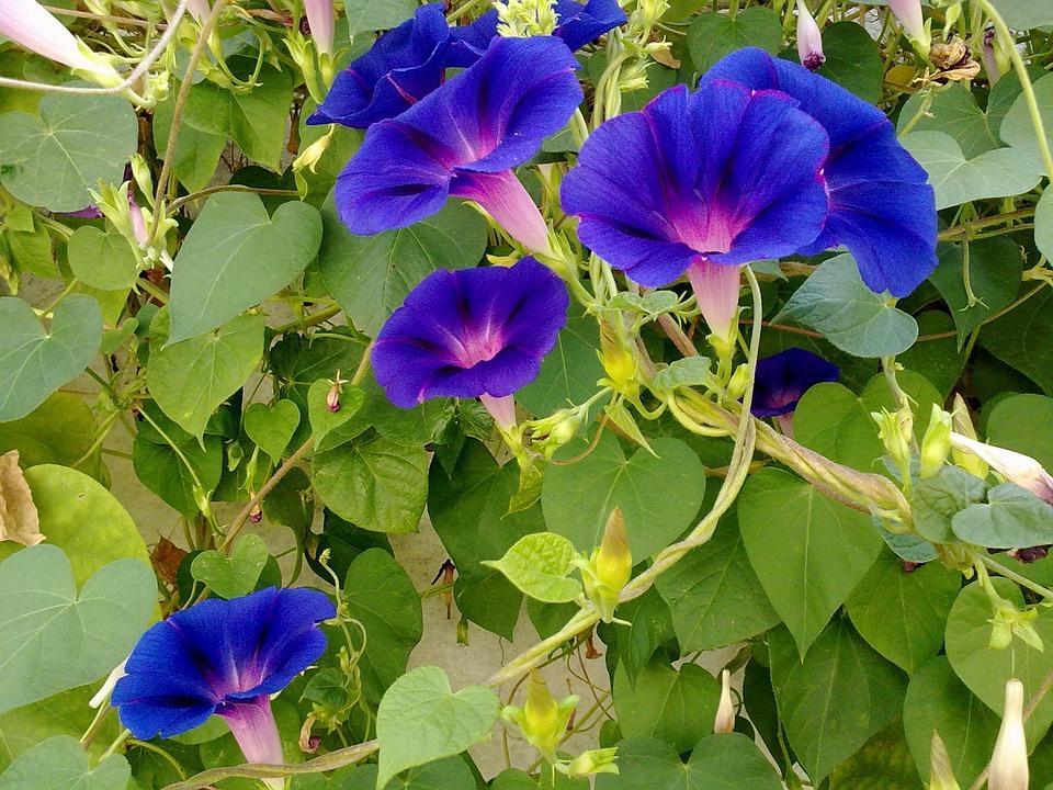 Kostenloses Foto: Garten, Blumen, Blau, Blume - Kostenloses Bild