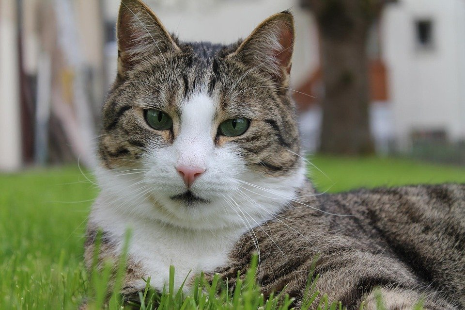 Stiahnite si zdarma ohromujúce obrázky o Mačka Hlava.