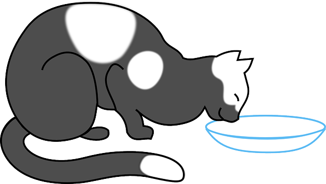 Cat Animal Drinking · Free vector graphic on Pixabay