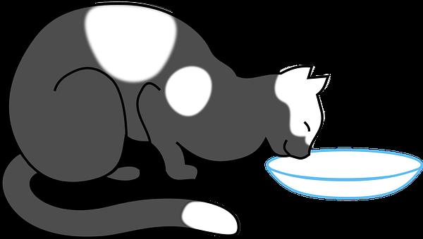 56 Koleksi Gambar Hewan Kucing Animasi HD Terbaik