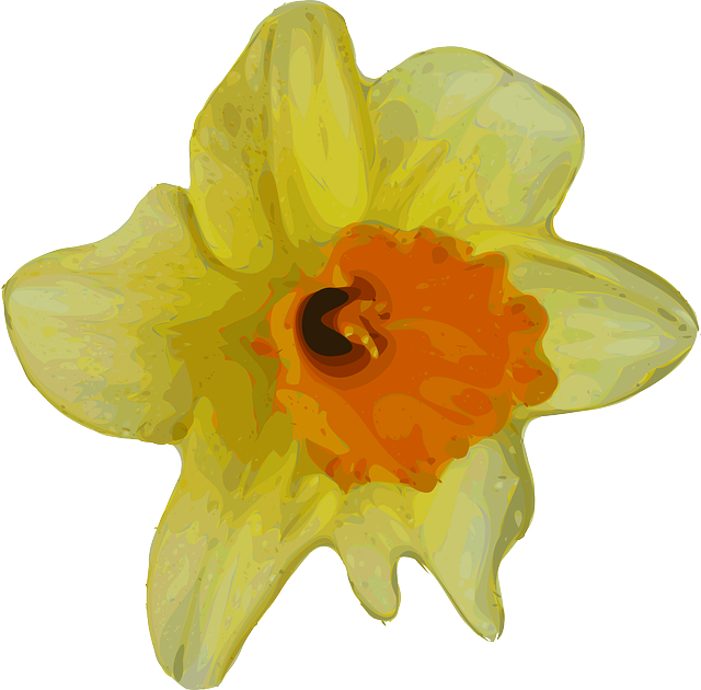 Free vector graphic: Daffodil, Narcissus, Flower, Plant ...