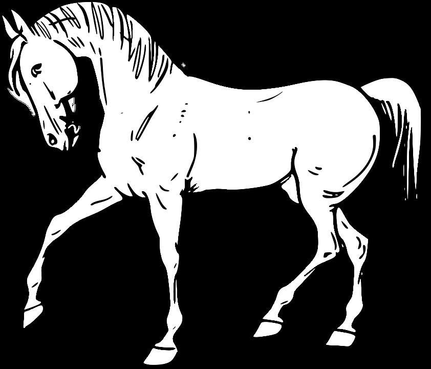 Caballo Animales Mamíferos Línea · Gráficos vectoriales gratis en ...