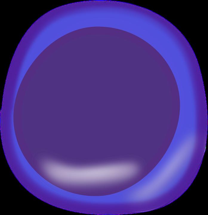 Celular La Biología Anatomía · Gráficos vectoriales gratis en Pixabay