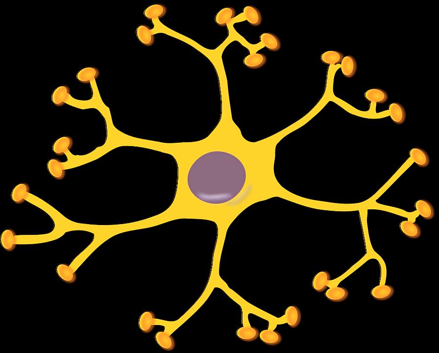 célula-nerviosa