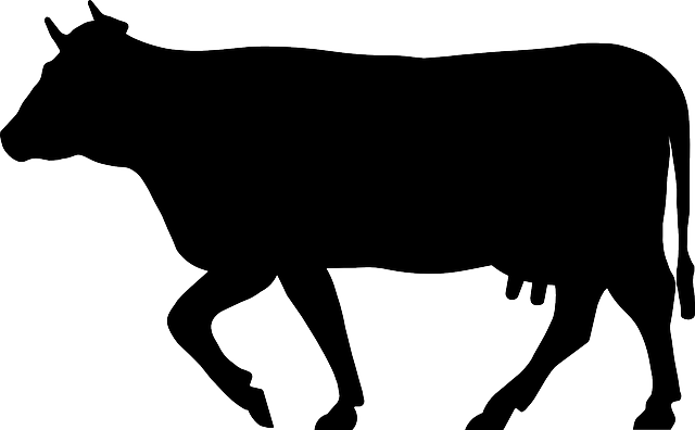 cow cattle beef  u00b7 free vector graphic on pixabay catfish clip art images black and white catfish clip art and designs for sale