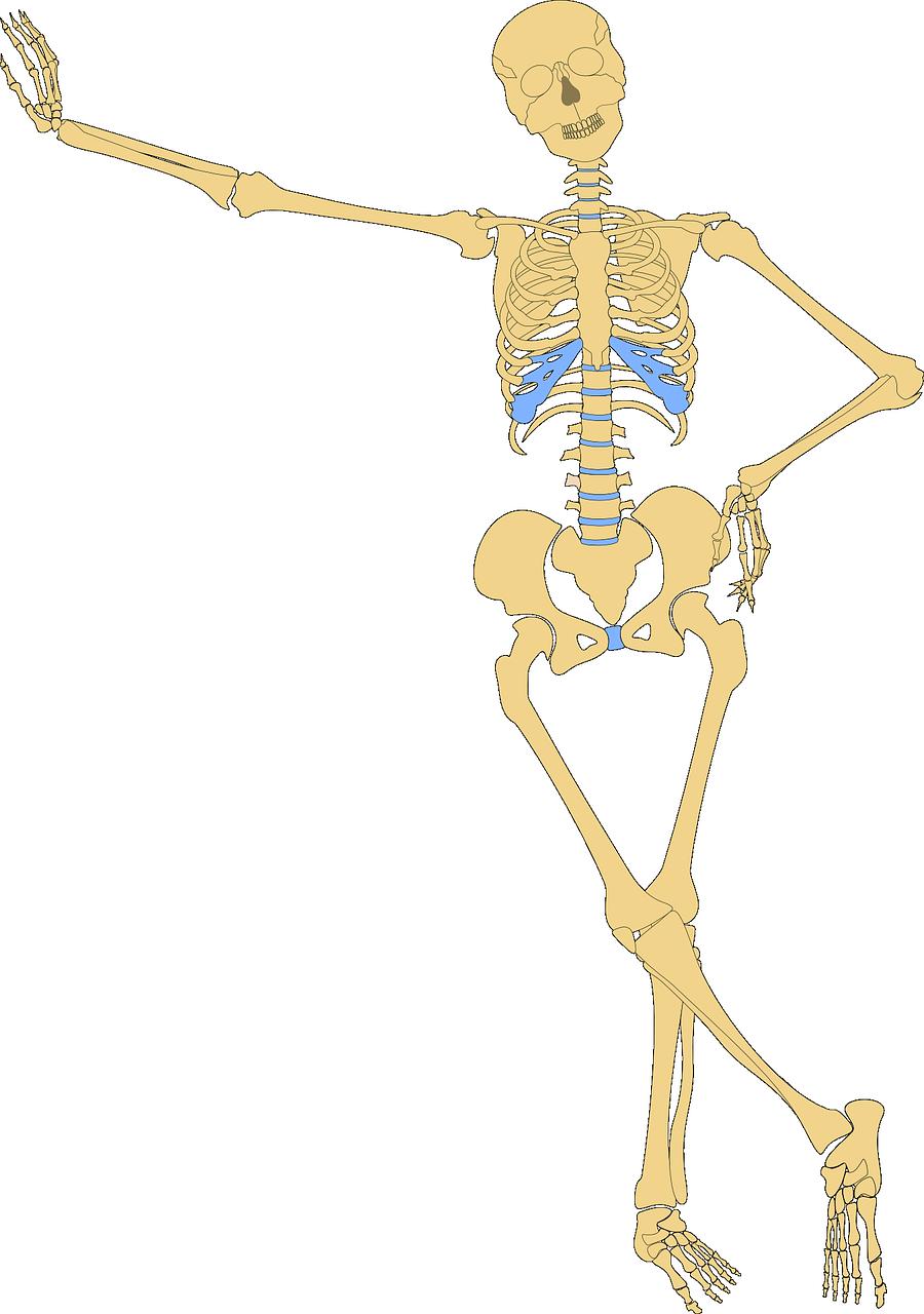 Картинки костей человека