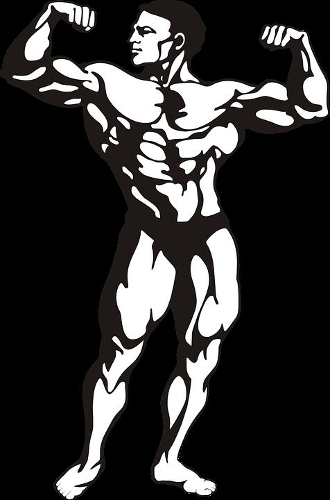 Vücut Geliştirmeci, Kasları, Adam, Insan, Strong, Kişi, mezomorf, somatotip
