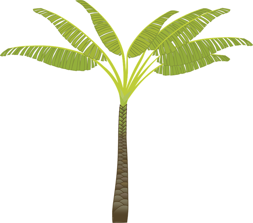 banana tree drawing png - photo #14