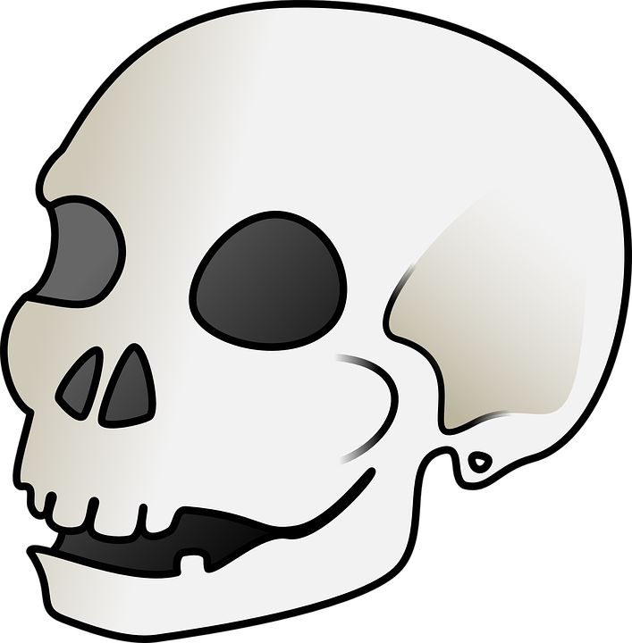 Skull Bones Anatomy · Free vector graphic on Pixabay