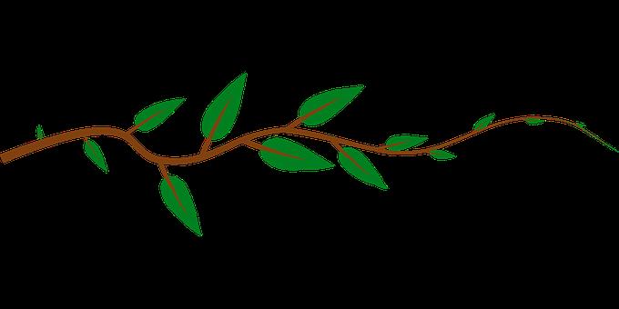 vine leaves images pixabay download free pictures