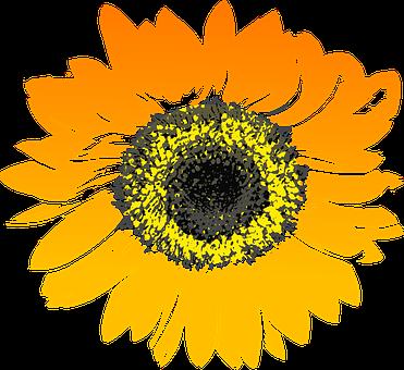 Sunflower Flower Yellow Orange S