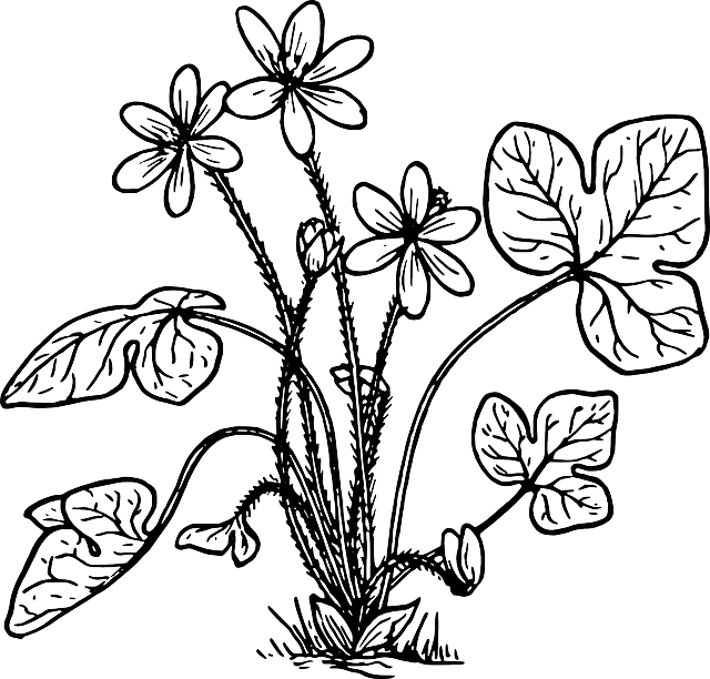 free vector graphic  herb  nature  plant  flower - free image on pixabay