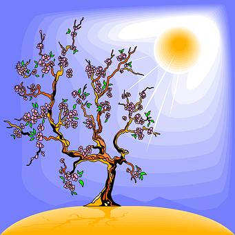Árbol, La Luz Del Sol, Sol, Fotosíntesis