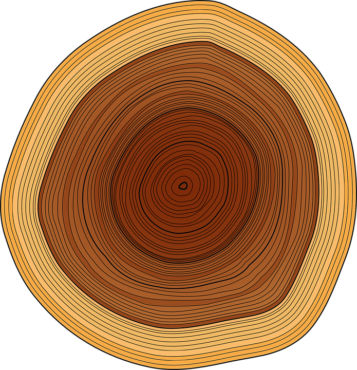 Free Vector Graphic  Annual Rings  Trunk  Tree  Rings