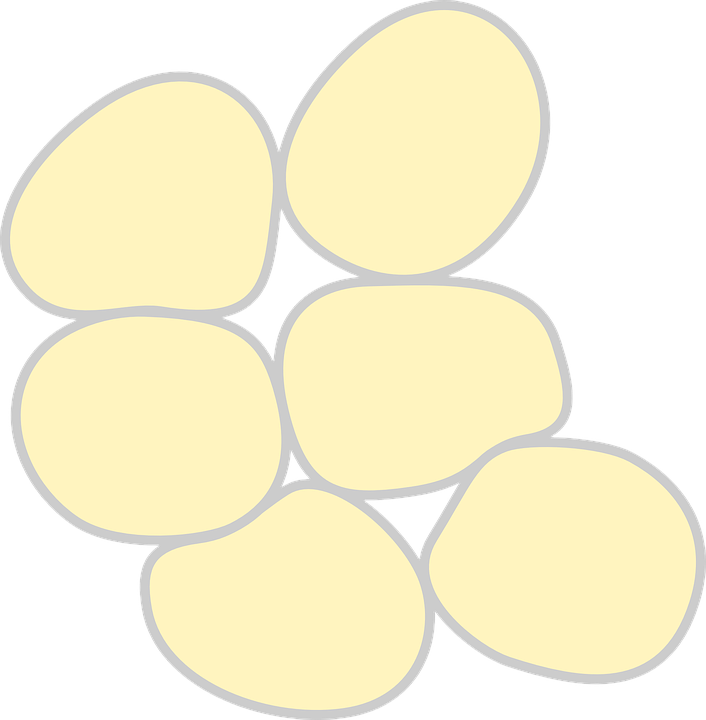 Grasa Células Medicina · Gráficos vectoriales gratis en Pixabay
