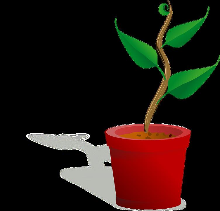 Pot De Fleurs Plus En Images Vectorielles Gratuites Sur Pixabay