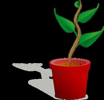 Blumentopf Bilder · Pixabay · Kostenlose Bilder herunterladen