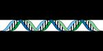 gene, genetic