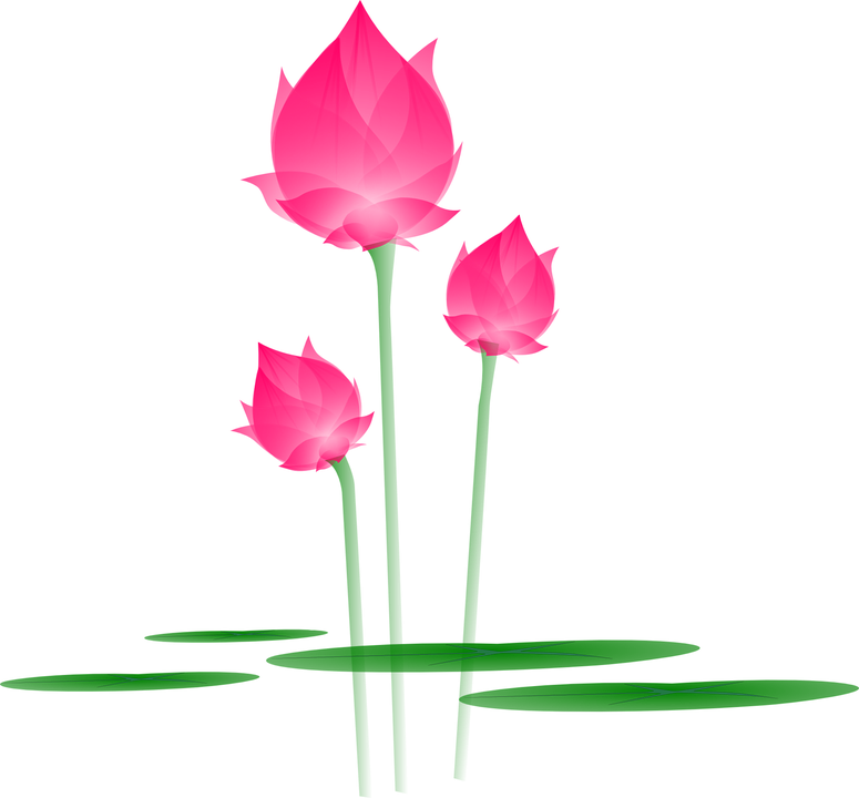 lotus blume bl te kostenlose vektorgrafik auf pixabay. Black Bedroom Furniture Sets. Home Design Ideas