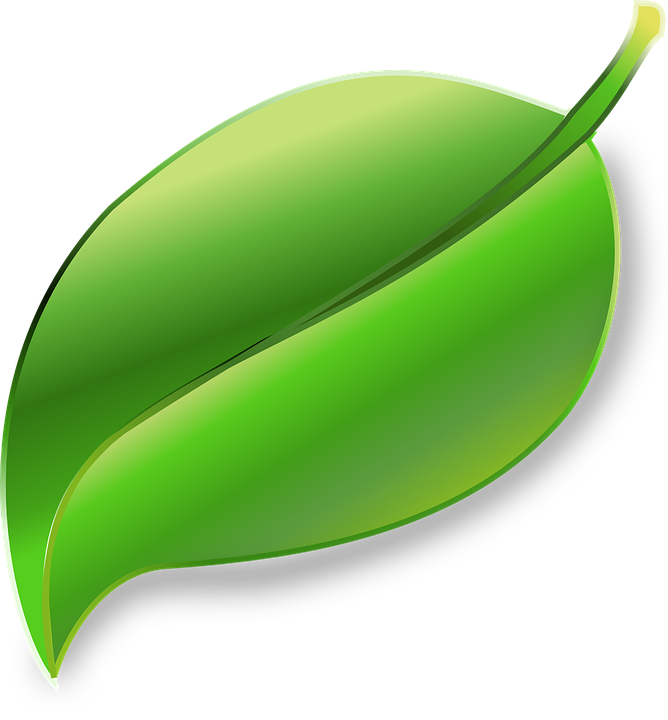 Free Vector Graphic: Leaf, Plant, Ecology, Environment