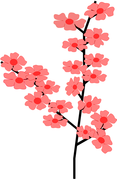 flower blossom bloom  u00b7 free vector graphic on pixabay