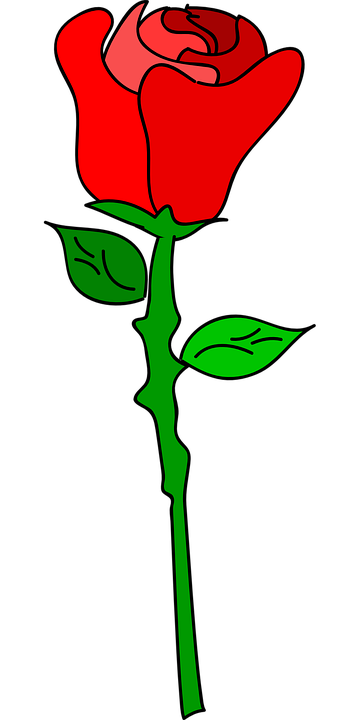 free vector graphic rose, flower, love, romance  free image on, Beautiful flower