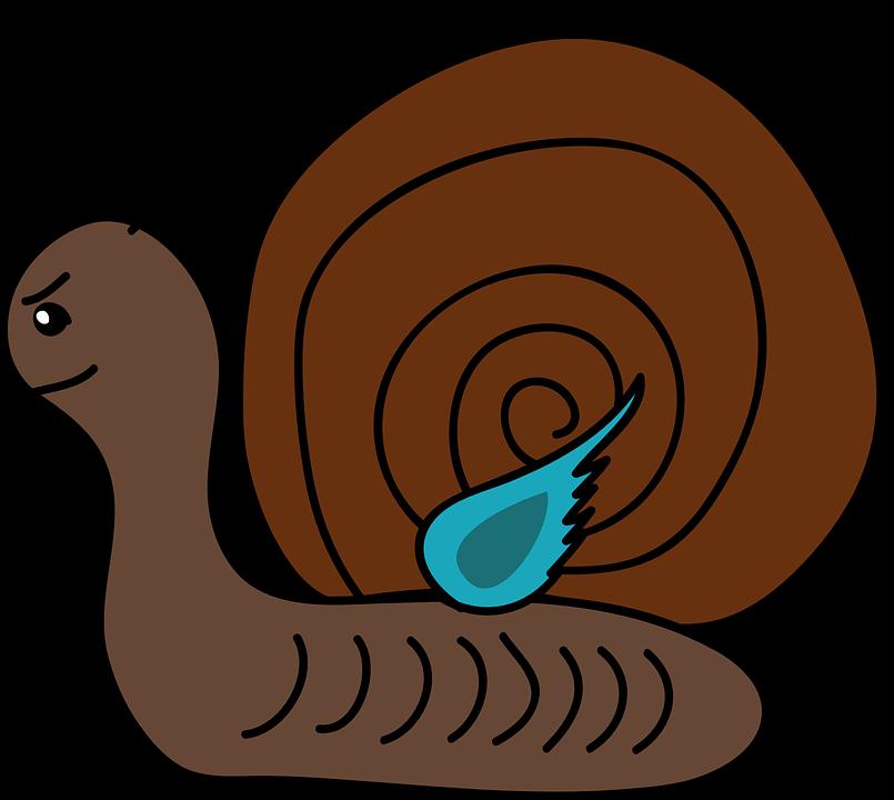 image vectorielle gratuite escargot gastropod univalve. Black Bedroom Furniture Sets. Home Design Ideas