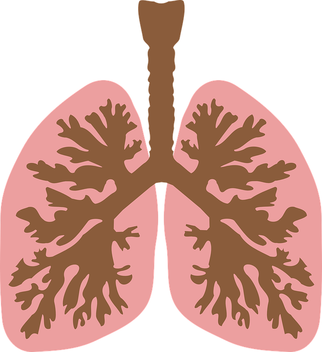 human-lung