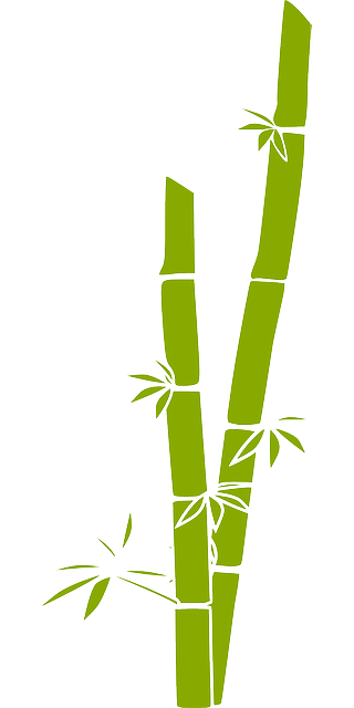Free vector graphic bamboo nature tree plant green