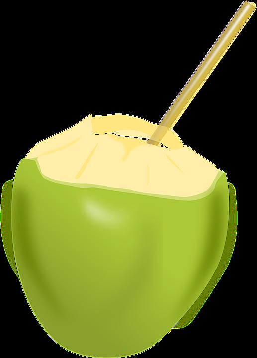 Kelapa Buah Minuman Gambar Vektor Gratis Di Pixabay
