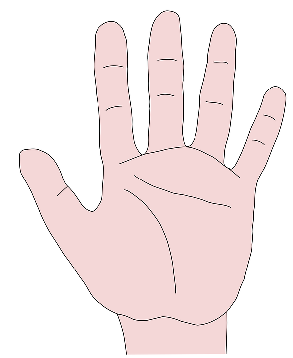 Hand Fingers Palm · Free vector graphic on Pixabay