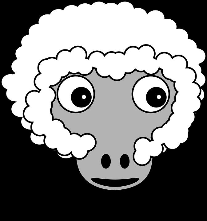Schafe, Flauschig, Bauernhof, Nutztiere, Weiß, Lustig