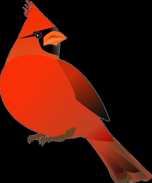 Free vector graphic: Cardinal, Bird, Cardinalidae - Free ...