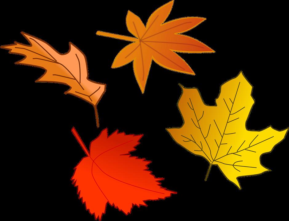 Laub Herbst Blatt · Kostenlose Vektorgrafik auf Pixabay