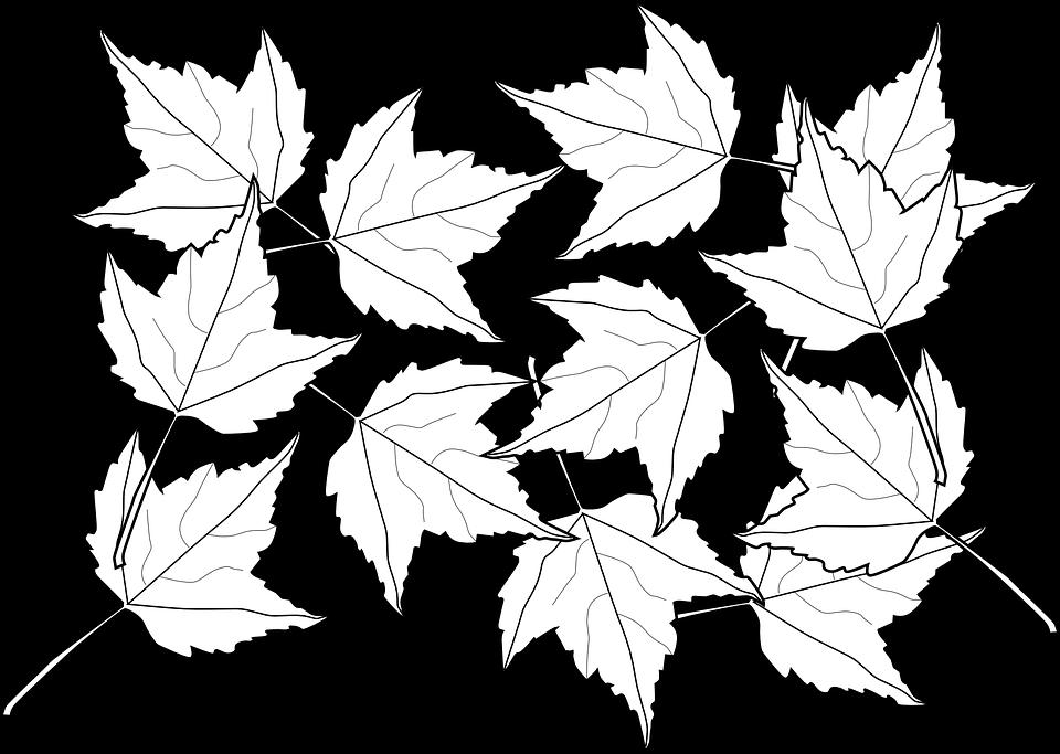 Мега раскраска кленовый лист