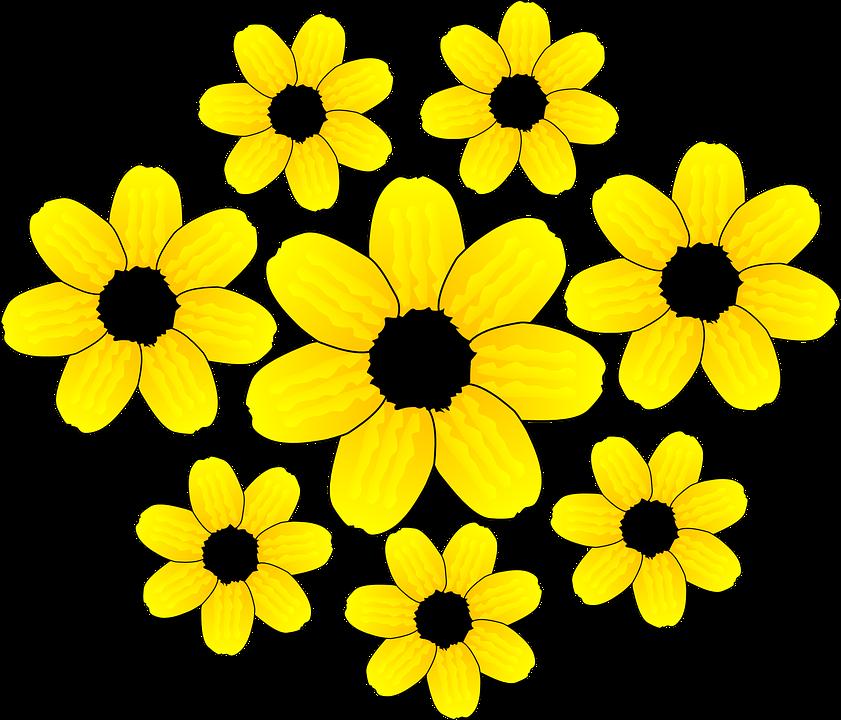 ดอกทานตะวัน