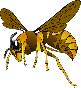 Hornet, Wasp, Insect, Bee, Brown, Yellow