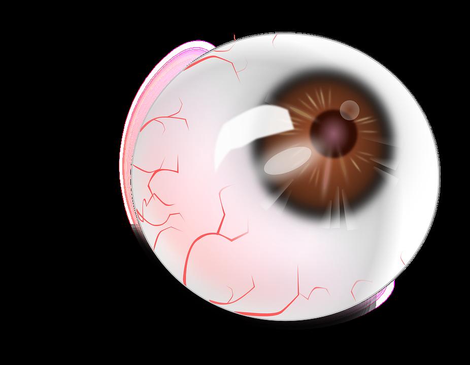 Globo Ocular Anatomía Rojo · Gráficos vectoriales gratis en Pixabay