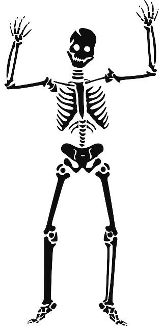 Skeleton Halloween Witch · Free vector graphic on Pixabay