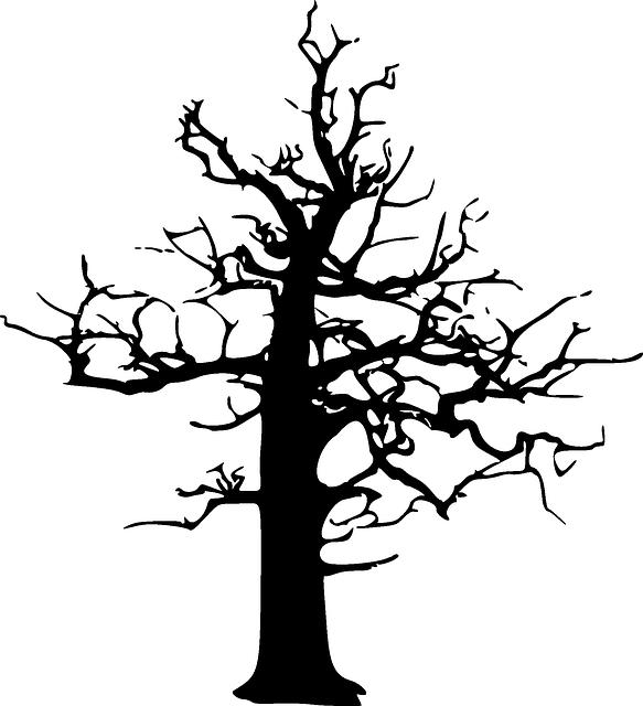 forest dieback decline dead  u00b7 free vector graphic on pixabay