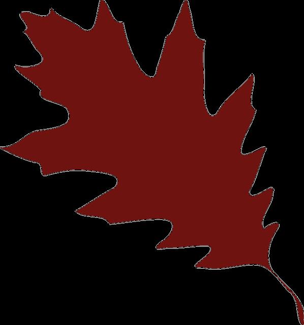 oak leaf foliage free vector graphic on pixabay rh pixabay com