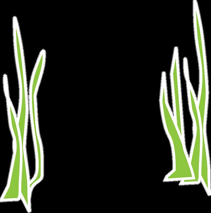 Seaweed Aqua Flora ...