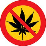 cannabis, marihuana, drugs