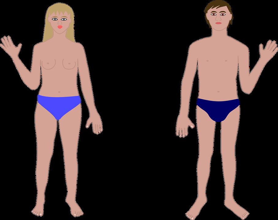 Anatomie Körper Paar · Kostenlose Vektorgrafik auf Pixabay