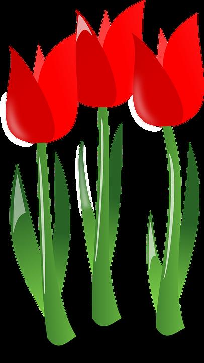 Tulipani, Fiori, Red, Piante, Fiore, Fioritura